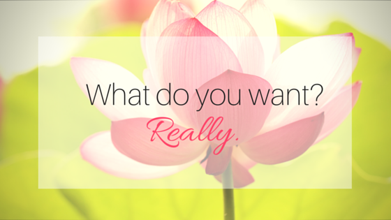 What do you want-